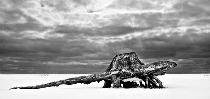 turtle of ice age #photo #landscape #BW