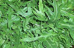 Rucola oder auch Rauke /Salatrauke ist ein uraltes Blattgemüse, das erst durch den italienische-Küche-Trend wieder trendig geworden ist.   Die Rauke gehört zu den Kohlgewächsen (Brassicaceae, Kreuzblütler) und sollte wegen der Kohlhernie-Gefahr nie nach anderen Kohlsorten angebaut werden.   Kreuzblütler) und sollte wegen der Kohlhernie-Gefahr nie nach anderen Kohlsorten angebaut werden.   ...