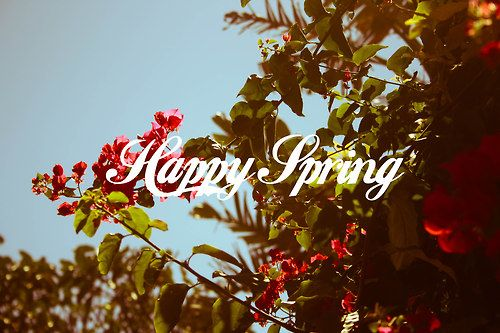 Happy Spring dear readers! May you wear flowers in your hair for no reason. May you buy fresh ones for your house when ever you see them. Heres to leaving windows open at night for the breeze, midnight chats in the garden, the smell of jasmine and lemons in the air and cool showers in the morning. Flowing skirts and flower crowns and crystals and the sound of tree frogs when the first spring rains start to fall. So many beautiful things to be happy about at the start of this season.  Pic…