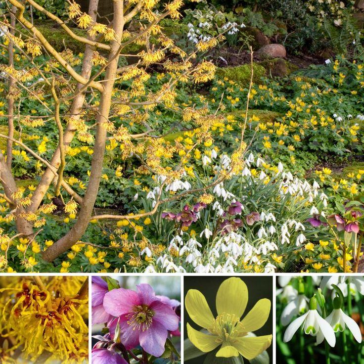 Les 68 meilleures images du tableau l 39 hiver au jardin sur for Plante en hiver