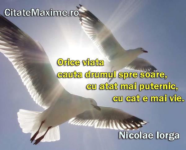 """Orice viata cauta drumul spre soare, cu atat mai puternic, cu cat e mai vie."" #CitatImagine de Nicolae Iorga Iti place acest #citat? ♥Like♥ si ♥Share♥ cu prietenii tai. #CitateImagini: #Aspiratii #NicolaeIorga #romania #quotes Vezi mai multe #citate pe http://citatemaxime.ro/"
