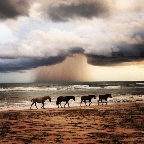 Horses run free into the sunset in Santa Teresa, Costa Rica.