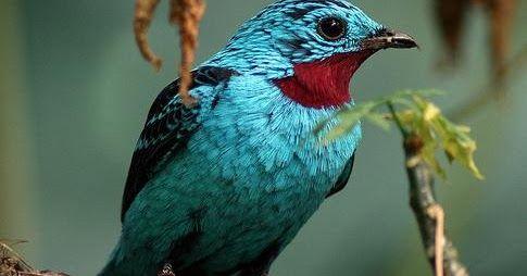 Colombia es el país con mayor cantidad y biodiversidad de aves del mundo con cerca de 1900 especies, de las cuales el 44% habita...