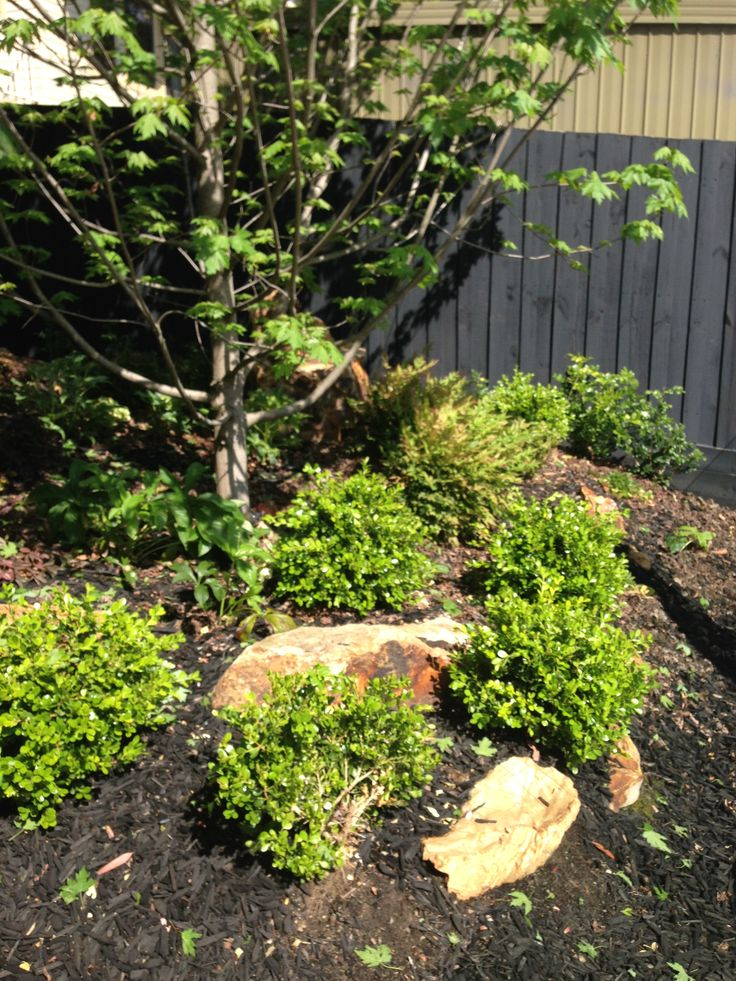 Oct15: I need to shape the Buxus Japonicas into little round balls - I wonder where I can get inspiration from?