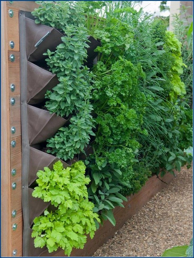 The Advantages of Outdoor Wall Planters