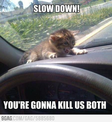Slow Down!..I am a sick person, I really Laughed MAO!