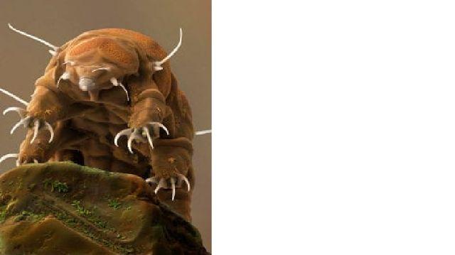 GENIO Italiano Giuseppe Cotellessa: Come i tardigradi sopravvivono alla disidratazione...