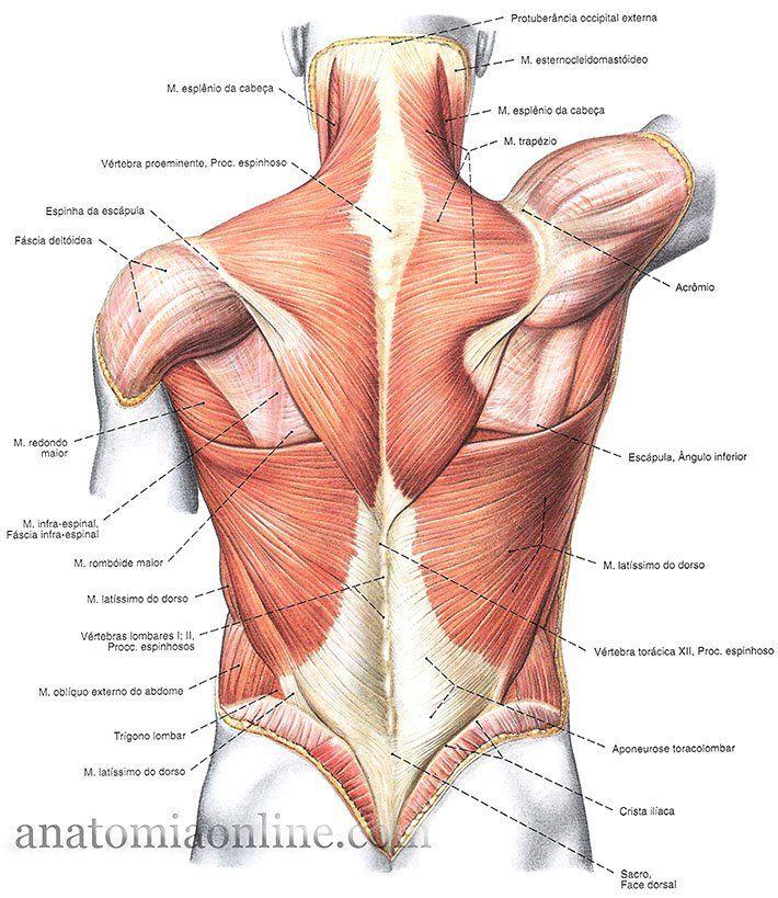 90 best Anatomía y Fisiología images on Pinterest | Nursing ...