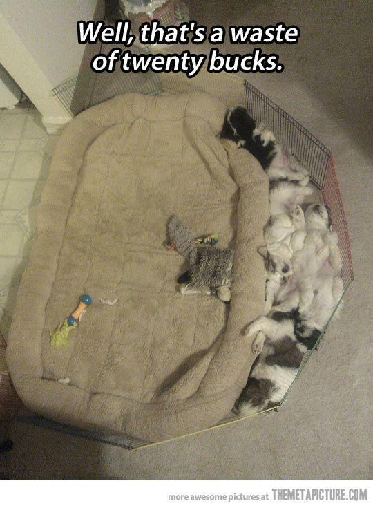 Hundeschlafplatz