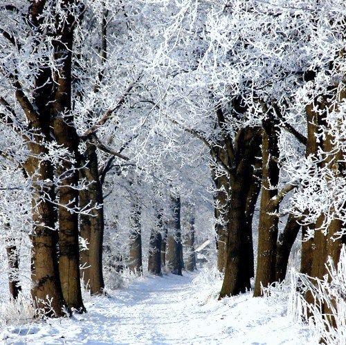 Meer dan 1000 afbeeldingen over sneeuw op Pinterest | Rendieren ...