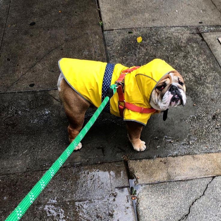Lyric rain rain go away lyrics : Best 25+ Rain go away ideas on Pinterest | Photographs, Daycare ...
