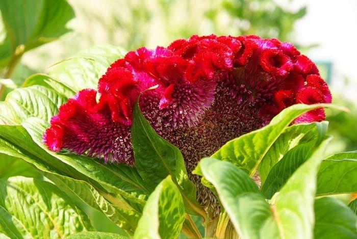 апреле бархатные цветы название и фото увидеться хотелось, пилось