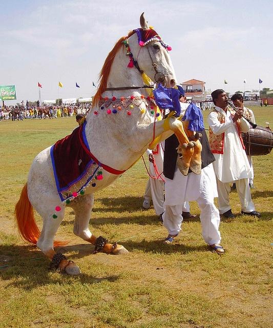 Dancing Horse by zahidpix, via Flickr