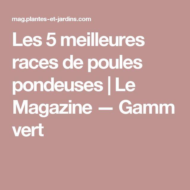 Les 5 meilleures races de poules pondeuses | Le Magazine — Gamm vert