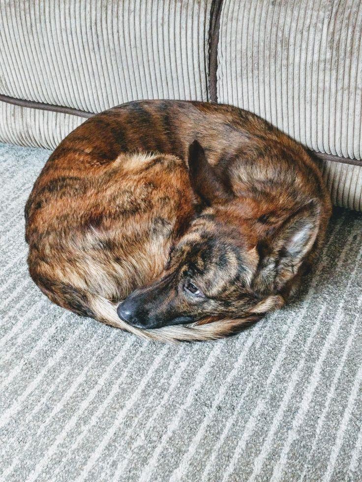 Halte deine Zehen warm, während Dad Fortnite spielt ift.tt/2HFAFGA – Aww …   – Adorable Kittens