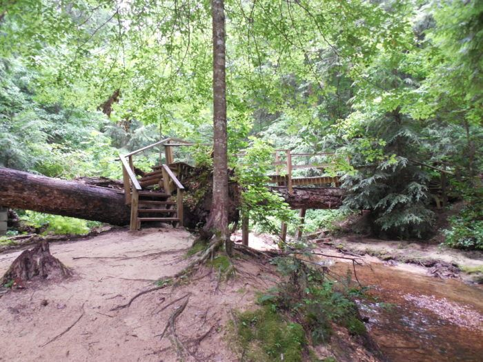 Travel | Alabama | Attractions | Things To Do | Dismals Canyon | Hidden Gems | Explore