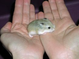 Tips on how to train your hamster to like you.