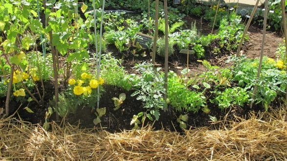 plantes compagnes et légumes
