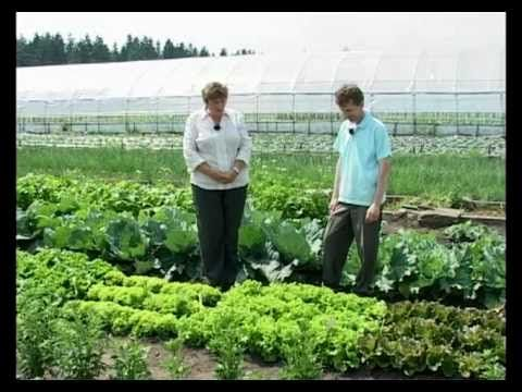 Сад и огород. Салат, базилик, шпинат - YouTube