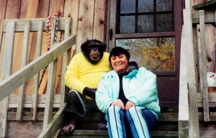 Travis was a chimpanzee involved in an attack on a woman, Charla Nash, who suffered serious injuries to her face, which was completely disfigured.