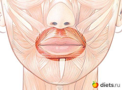"""Укрепляем круговую мышцу рта: упражнение """"Хоботок"""": Фейскультура: методы естественного омоложения: Группы - diets.ru"""