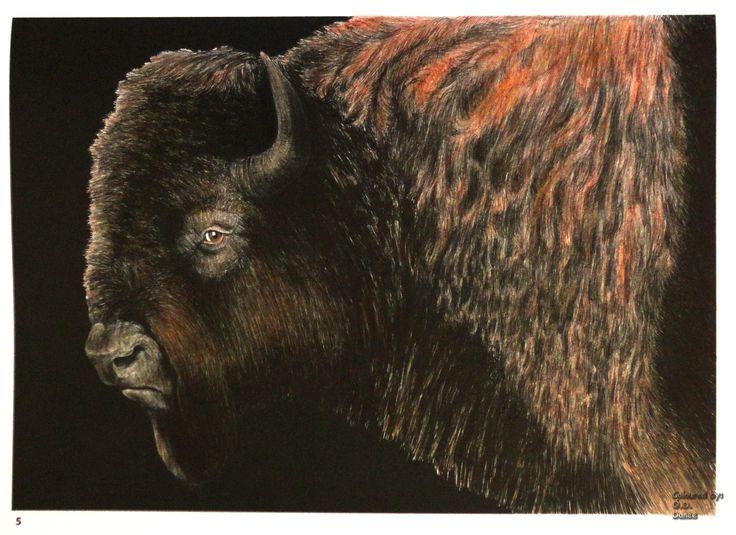 Tim Jeffs -  Intricate Ink Animals in Details volume 1   Buffalo Coloured with Giotto Stilnovo Skintones pencils