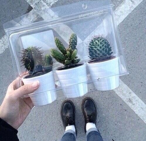 Imagem de cactus, plants, and grunge