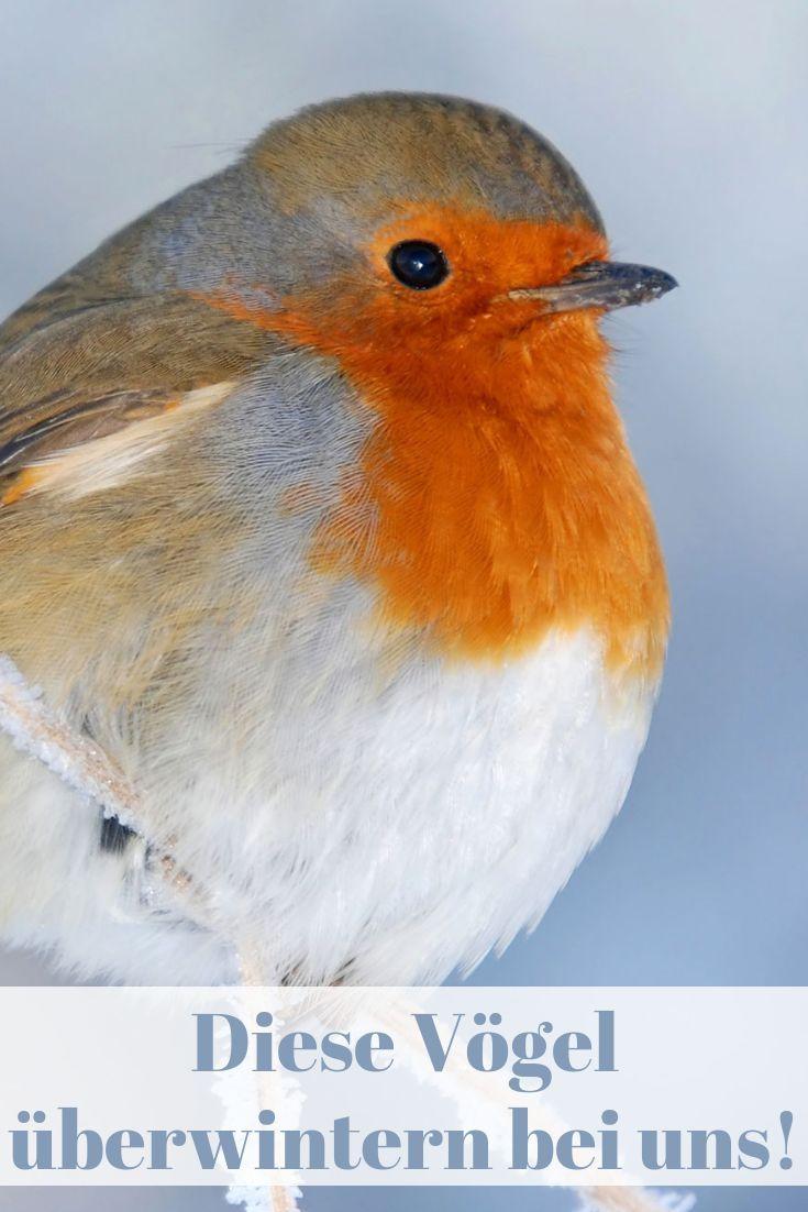 Nicht Jeder Vogel Fliegt Auch In Den Suden Diese Exemplare Bleiben In Unseren Heimischen Garten Und Konnen Im Vogel Im Garten Fliegende Vogel Vogel Im Winter