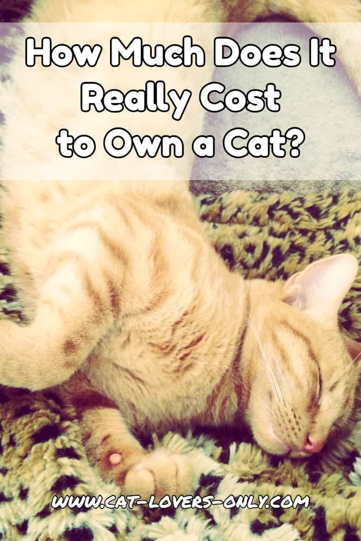 The Cost Of Owning A Cat Owning A Cat Cat Care Cat Adoption