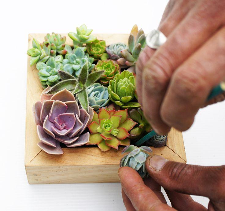 1000 id es sur le th me culture de plantes grasses sur. Black Bedroom Furniture Sets. Home Design Ideas
