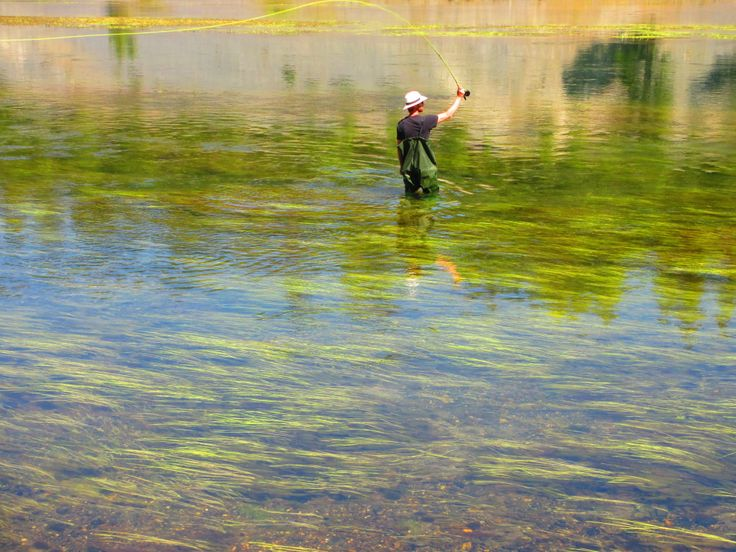 17 best images about trout on pinterest trout fishing for Fly fishing yellowstone river