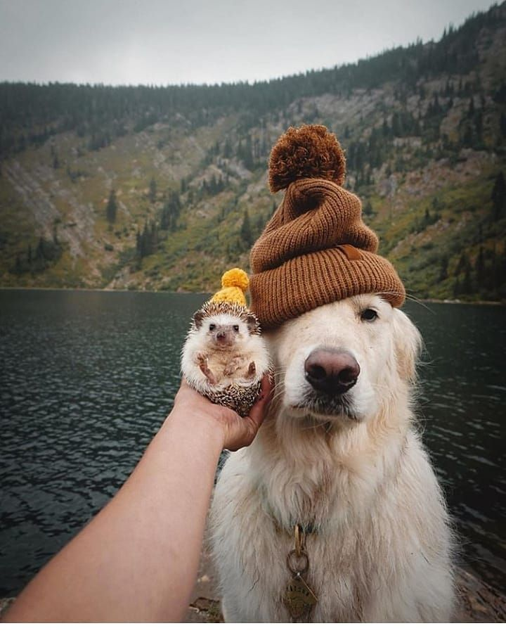 We Are Dog Lovers What Can We Do Let Your Days Be Full Of Animal Love Room Questio Cute Baby Animals Cute Dogs