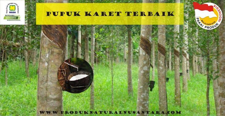 Pupuk Karet Terbaik. PT. Natural Nusantara menghadirkanPupuk untuk karet guna meningkatkan hasil produksi karet. Hub 081226523400 untuk pemesanan pupuk nasa