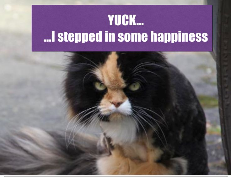 1. Unexpectedly happy things that have happened. 2. Gross things that have happened to me. 3. Training a cat - imagine trying to make a good citizen out of Grumpy Cat.