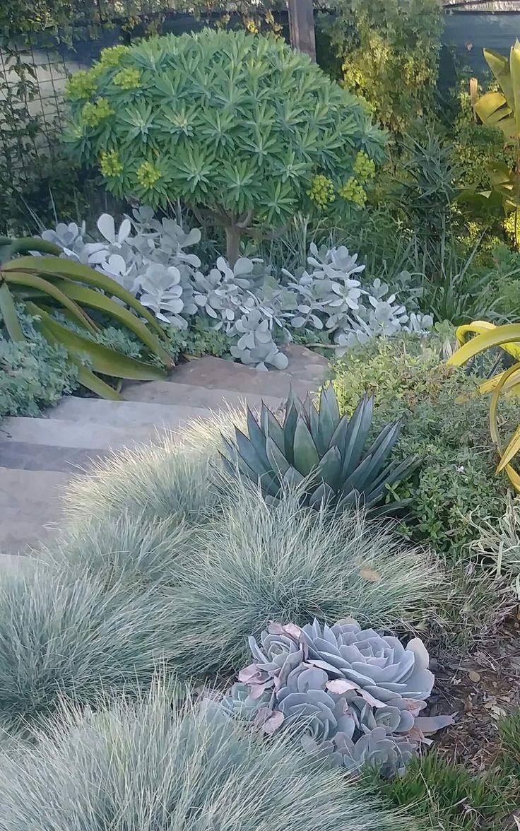 Kombination von Sukkulenten und traditionellen Pflanzen.