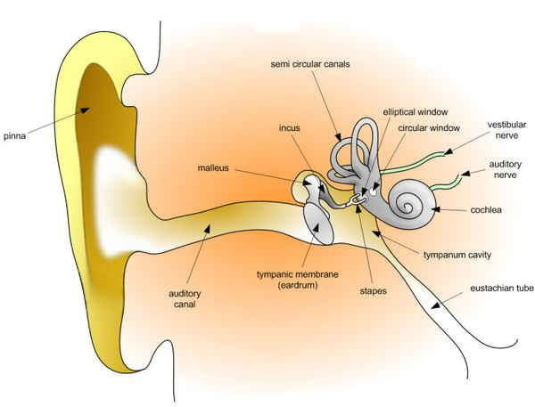 The Healthy Diver: Tips for Clearing Your Ears | By Sport Diver Magazine