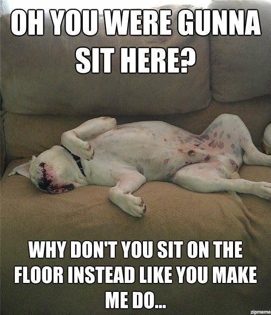 american bulldog sayings | ... http://www.funnyjunk.com/funny_pictures/3960782/My+American+Bulldog
