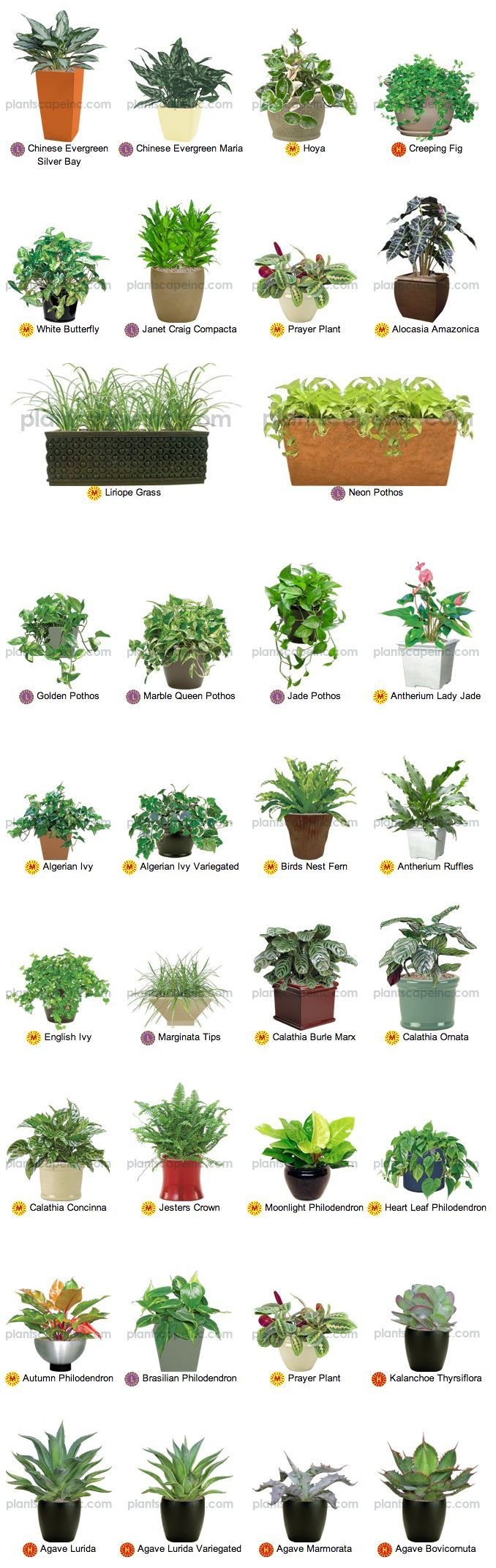 Desktop Office Plants by Plantscape Inc.: