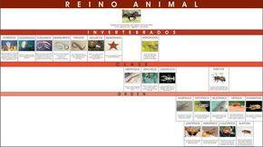 Didactica Personalizada - Reino Animal Invertebrados CONTROL Material Educativo Montessori | Chihuahua, México
