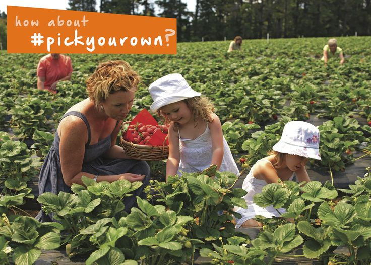 Summer brings so many fun things to do, including #strawberry season! #Pickyourown berries at a farm near you!