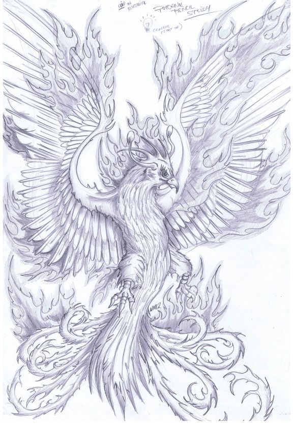 Image result for phoenix gryphon