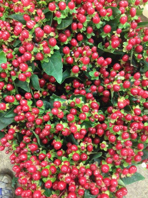 Hypericum 'Magical Tropical Fall'...Sold in bunches of 10 stems from the Flowermonger the wholesale floral home delivery service.
