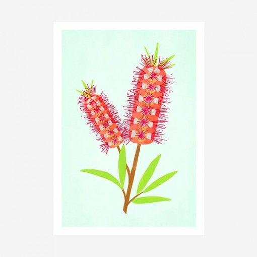 Native flora art print - bottlebrush