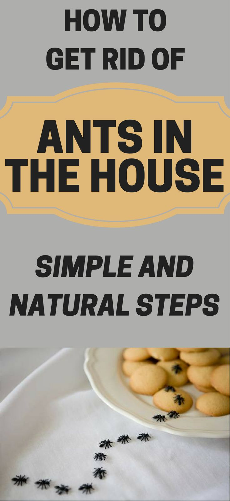Ants In Bathroom Photos Design Ideas