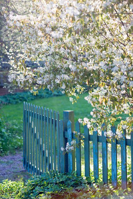 Gate Under Blooming Tree