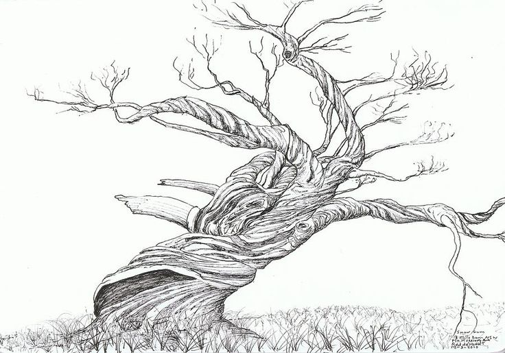 Snow Gum by Rod De Hoedt - Snow Gum Drawing - Snow Gum Fine Art ...