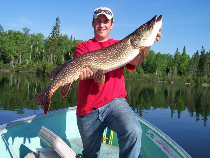The 25+ best ideas about Pike Fishing Tips on Pinterest ...