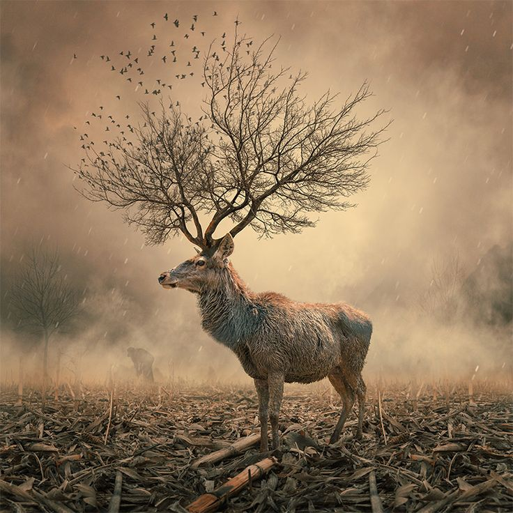 Manipulated photos of dark narratives By Caras Lonut