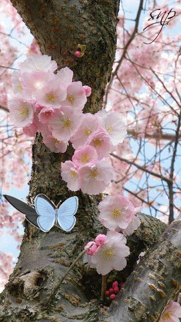 Красивое японское дерево и голубая бабочка - анимация на телефон №1154817