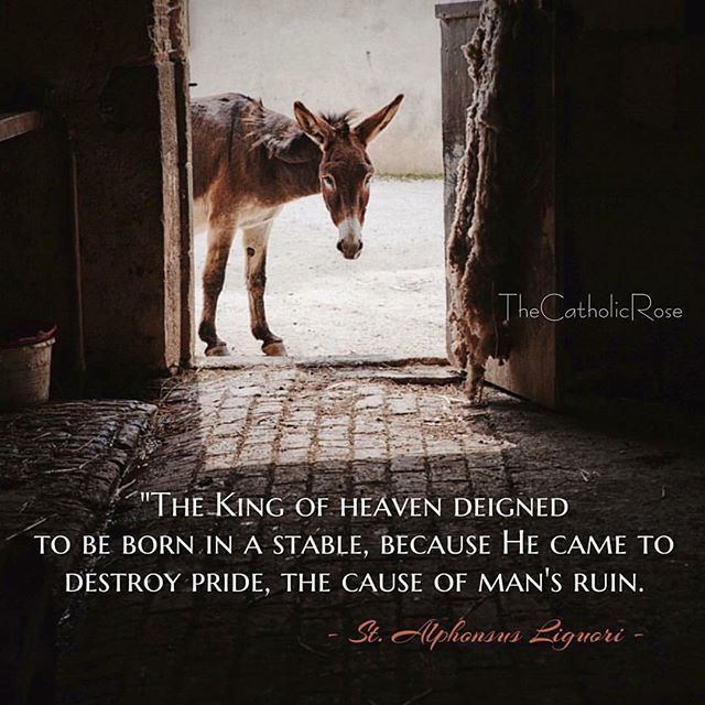 """""""THE KING OF HEAVEN DEIGNED TO BE BORN IN A STABLE, BECAUSE HE CAME TO DESTROY PRIDE, THE CAUSE OF MAN'S RUIN."""" - ST. ALPHONSUS LIGUORI #catholic #stalphonsusliguori #advent"""